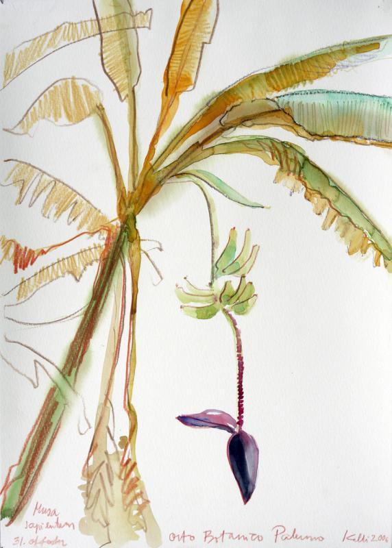 "akvarell \""Banaanid\"" / \""Bananas\"" aquarelle"
