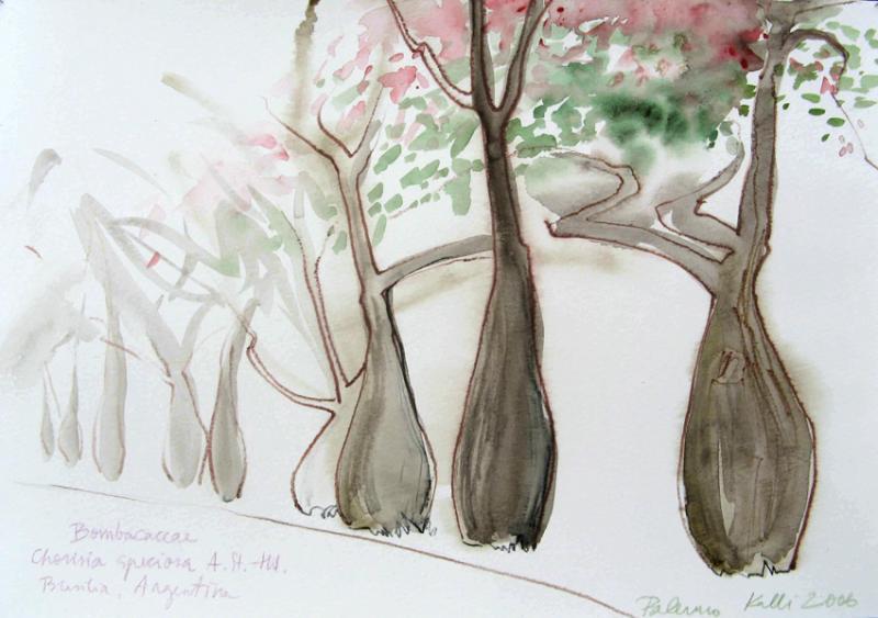 Pudelpuud Palermo botaanika aias