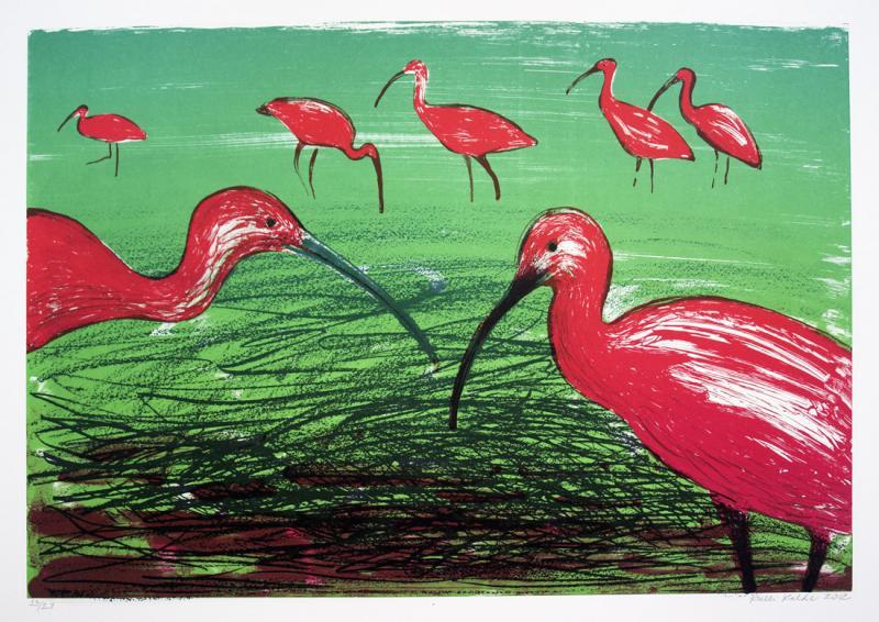 "lito \""Punased iibised\"" / \""Scarlet ibises\"" algraphy"